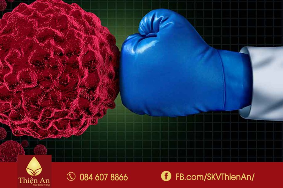Đông trùng hạ thảo tốt cho người ung thư?